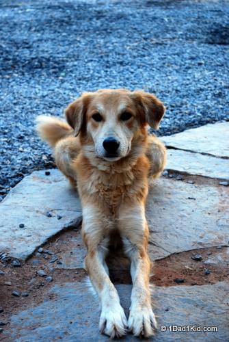 Moroccan oasis dog