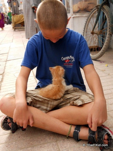 get lost, essaouira, kitten, morocco