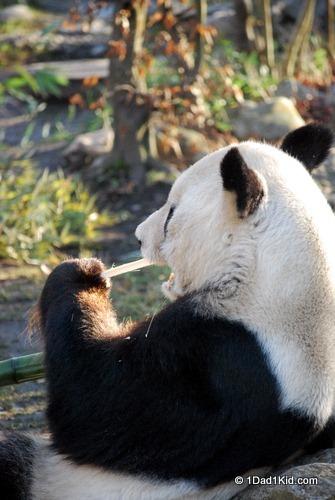 Vienna's Zoo