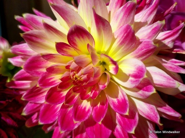 nomadic, flower