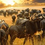 Top 3 Luxury Safari Destinations in Africa